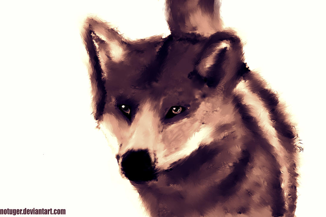Wolf - Gabriel Craveiro by notuger