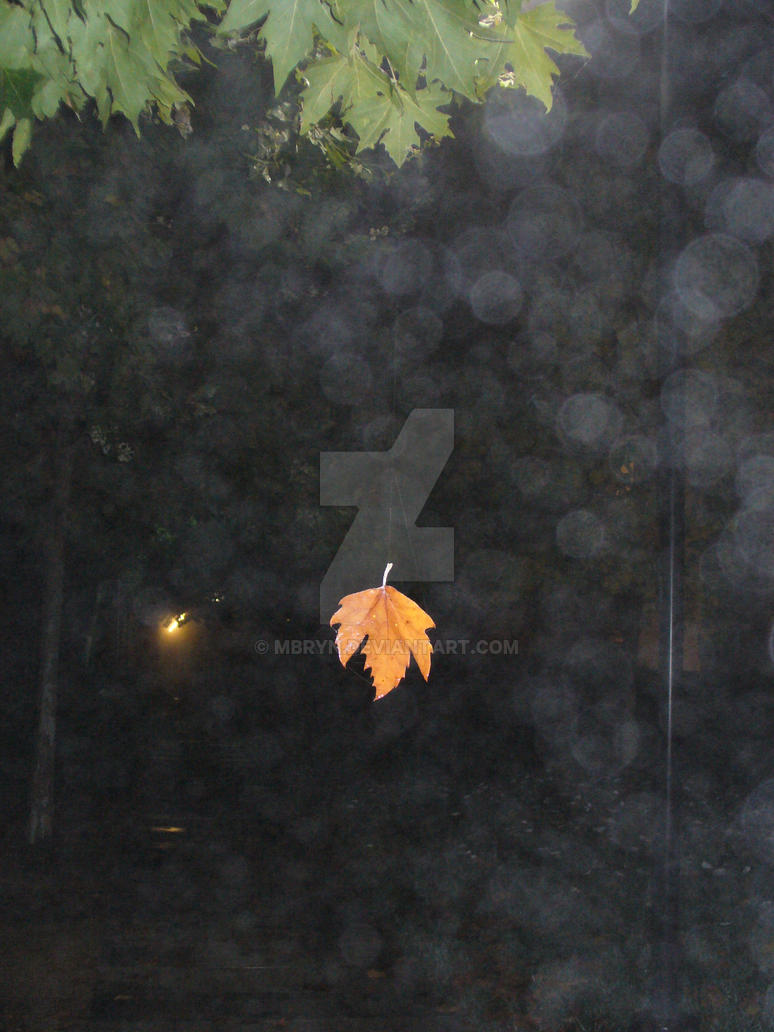 The Magic Leaf by MBryn