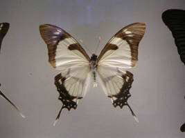 Butterfly I by two-ladies-stocks