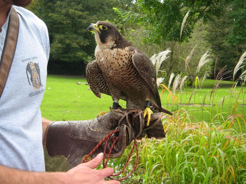 hawk IV by two-ladies-stocks