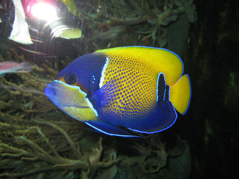 coloured fish by two-ladies-stocks