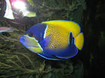 coloured fish