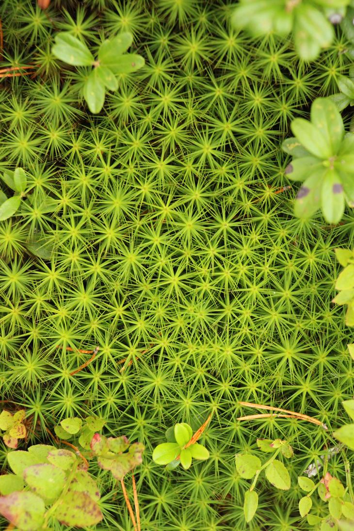 swedish moss by two-ladies-stocks