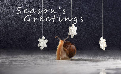 Season's greetings cards by MichelleRamey