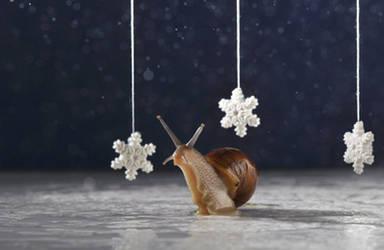 Season's Greetings Snail cards 2 by MichelleRamey