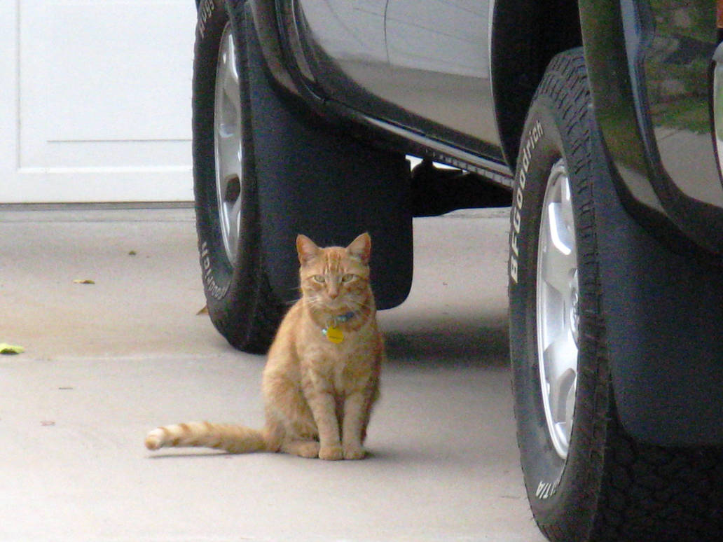 Tempe Kitty 1