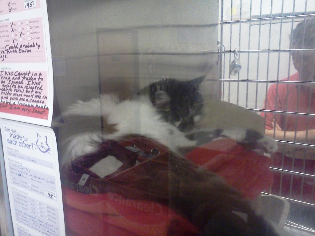 Petsmart's Kitties 1 by BigMac1212