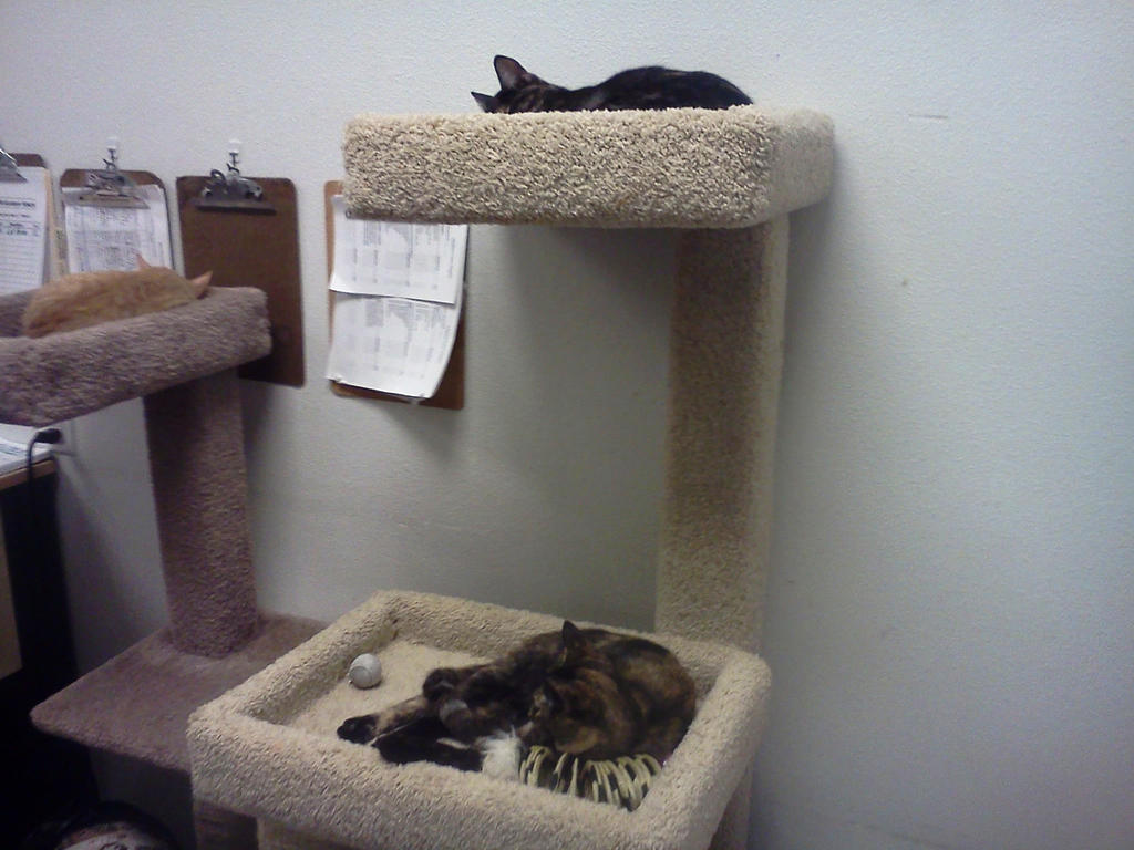 Petsmart's Kitties 2 by BigMac1212