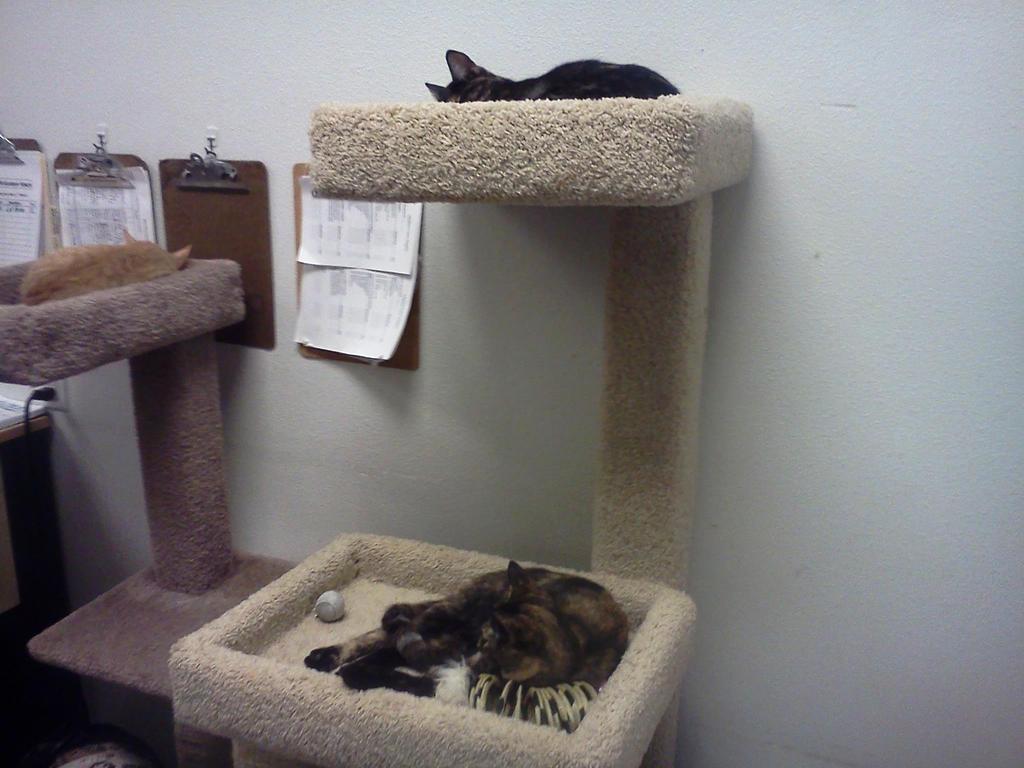 Petsmart's Kitties 2 by BigMac1212
