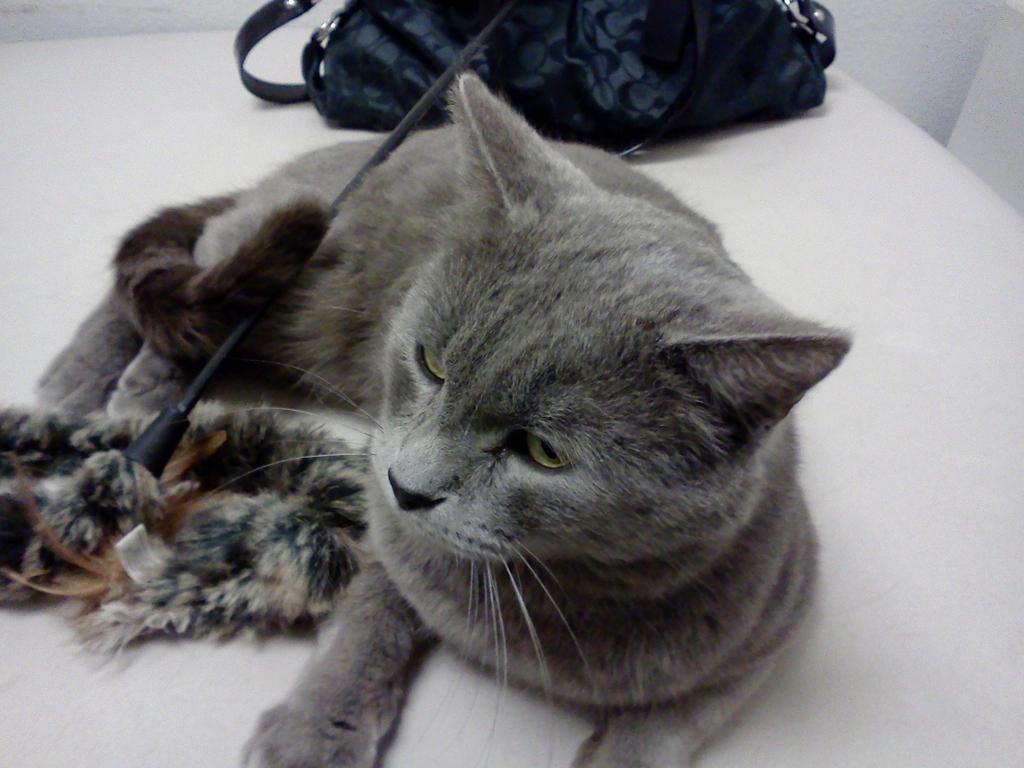 Petsmart's Kitties 18 by BigMac1212