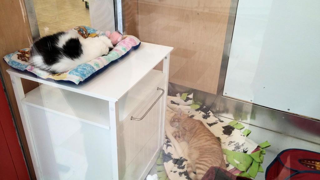 2014 Pet Match Kitties 129 by BigMac1212