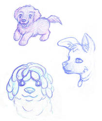Dog Sketches by toonishdreams