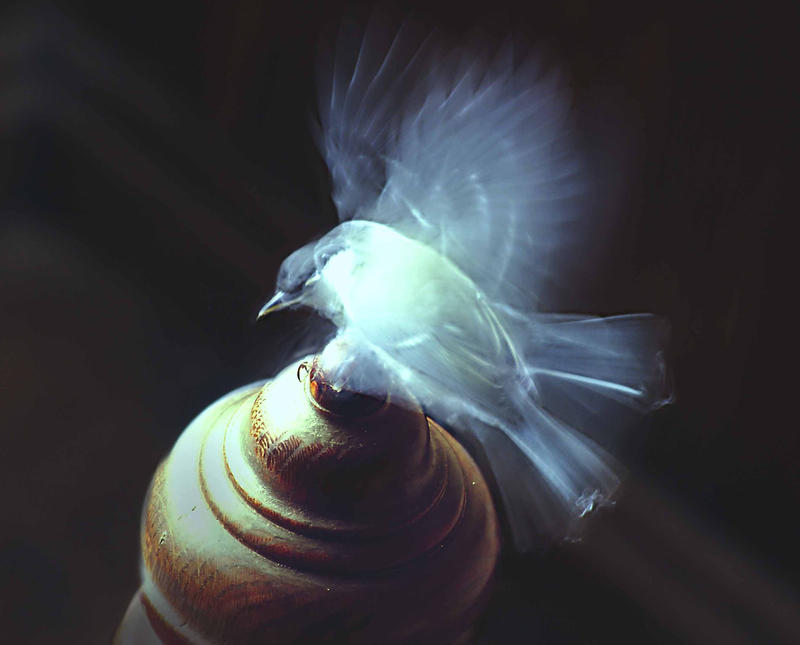 Blue Smoke by alexandrabirchmore