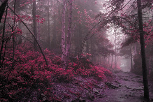 [stock] Mystic woods