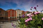 Flowers in Trondheim by DominikaAniola