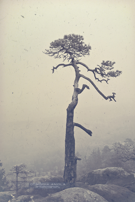 A single tree by DominikaAniola