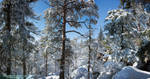 Winter In March by DominikaAniola