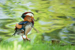 Mandarin Duck by DominikaAniola