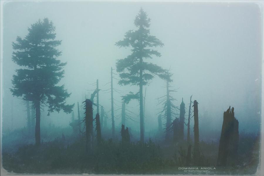Dark forest by DominikaAniola