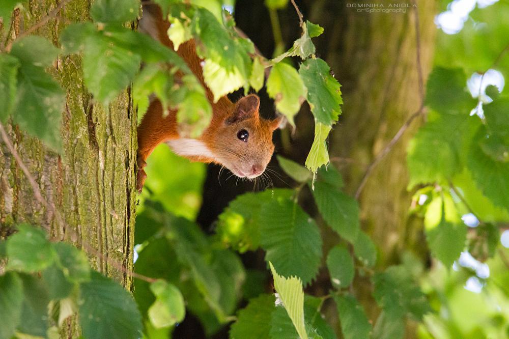Peeking by DominikaAniola