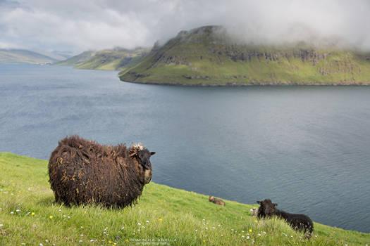 Faroe Islands #1