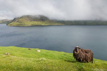 Faroe Islands #3