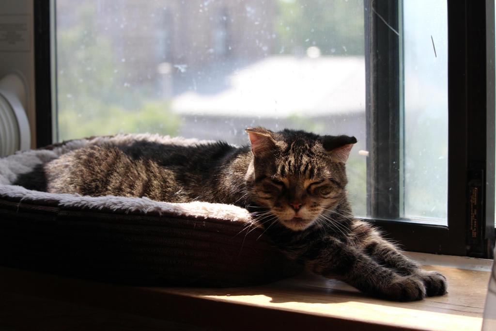 Lazy Day by MilaFriiele