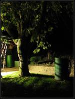 Garden At Midnight