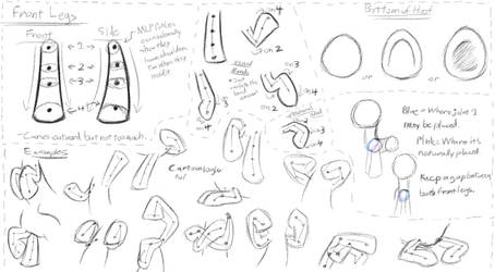 MLP - Basic Anatomy Study 2 - Front Legs