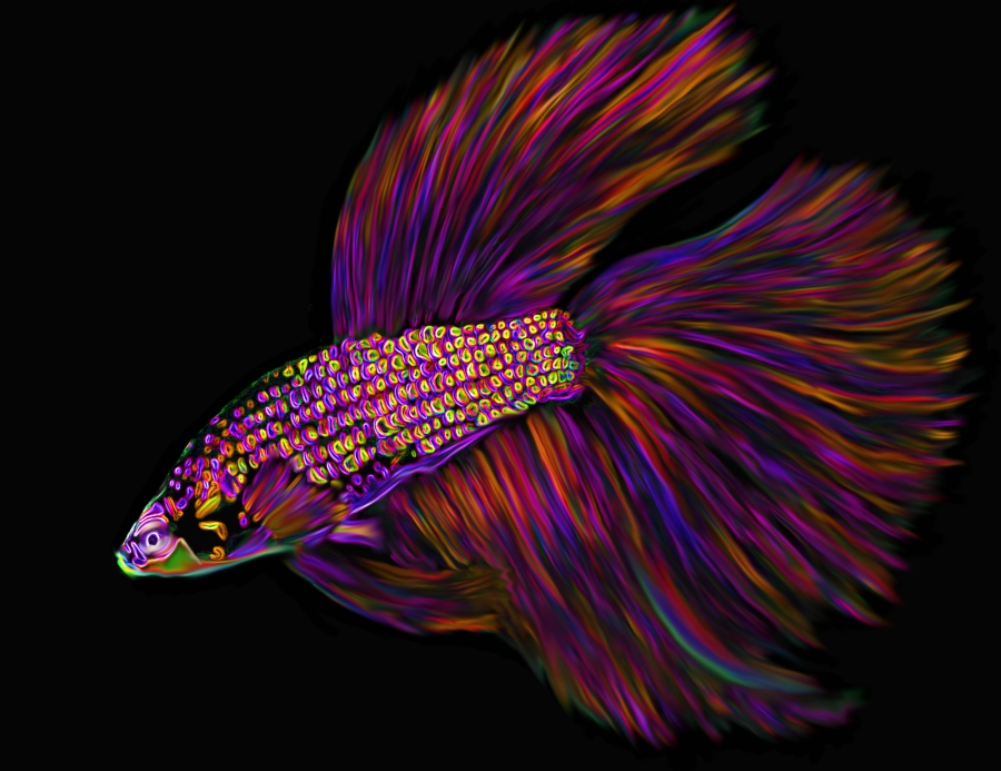 Fish contest neon betta by carol colors on deviantart for Betta fish colors