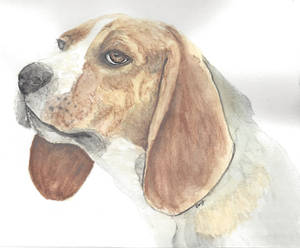 Water Color Practice - Beagle