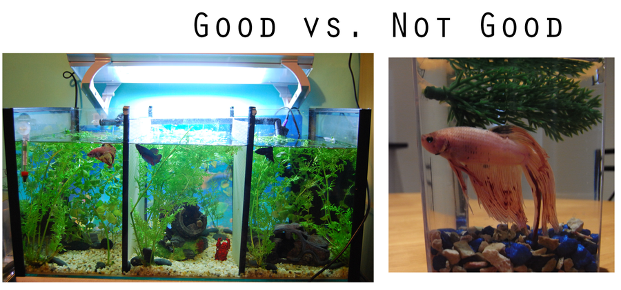 Betta home good and bad by hymnsie on deviantart for Betta fish tank size