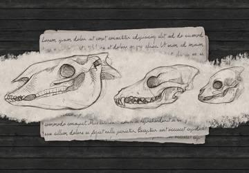 Liadan Skulls by Hymnsie