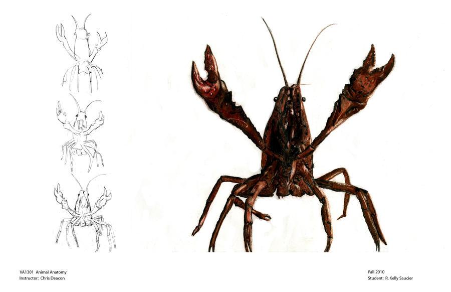 Animal Anatomy Crawfish By Artisteassassin On Deviantart