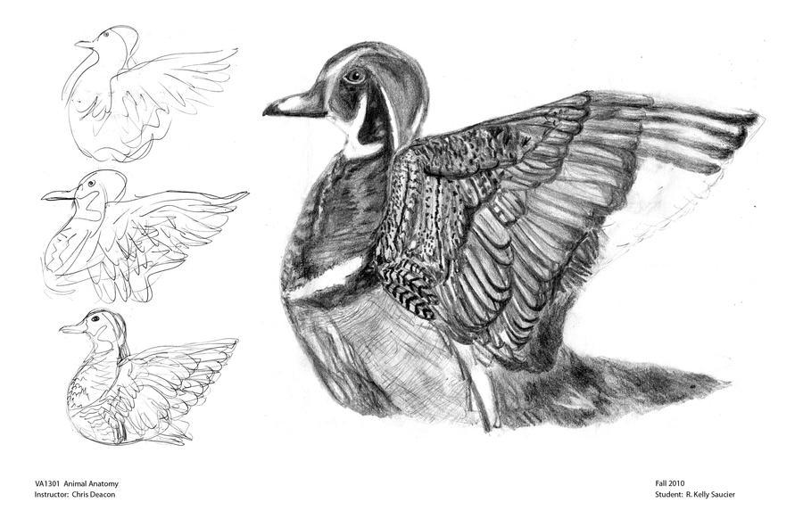 Animal Anatomy Wood Duck By Artisteassassin On Deviantart