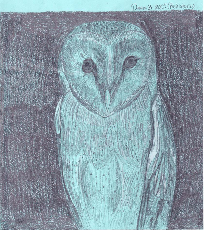 Barn owl by XenoTeeth3