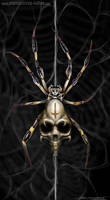 Death spider by AtomiccircuS