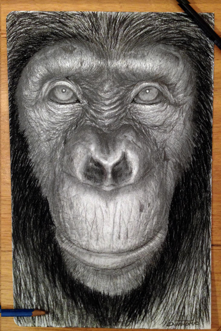 Ape by AtomiccircuS