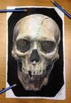 Skull color pencil drawing