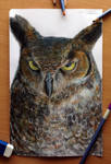 Owl Color Pencil Drawing