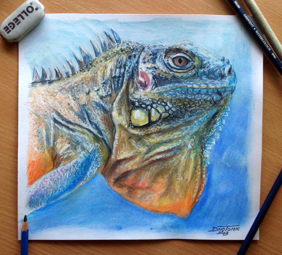 Lizard Color pencil Drawing by AtomiccircuS on DeviantArt
