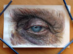 Old Eye Color Pencil Drawing