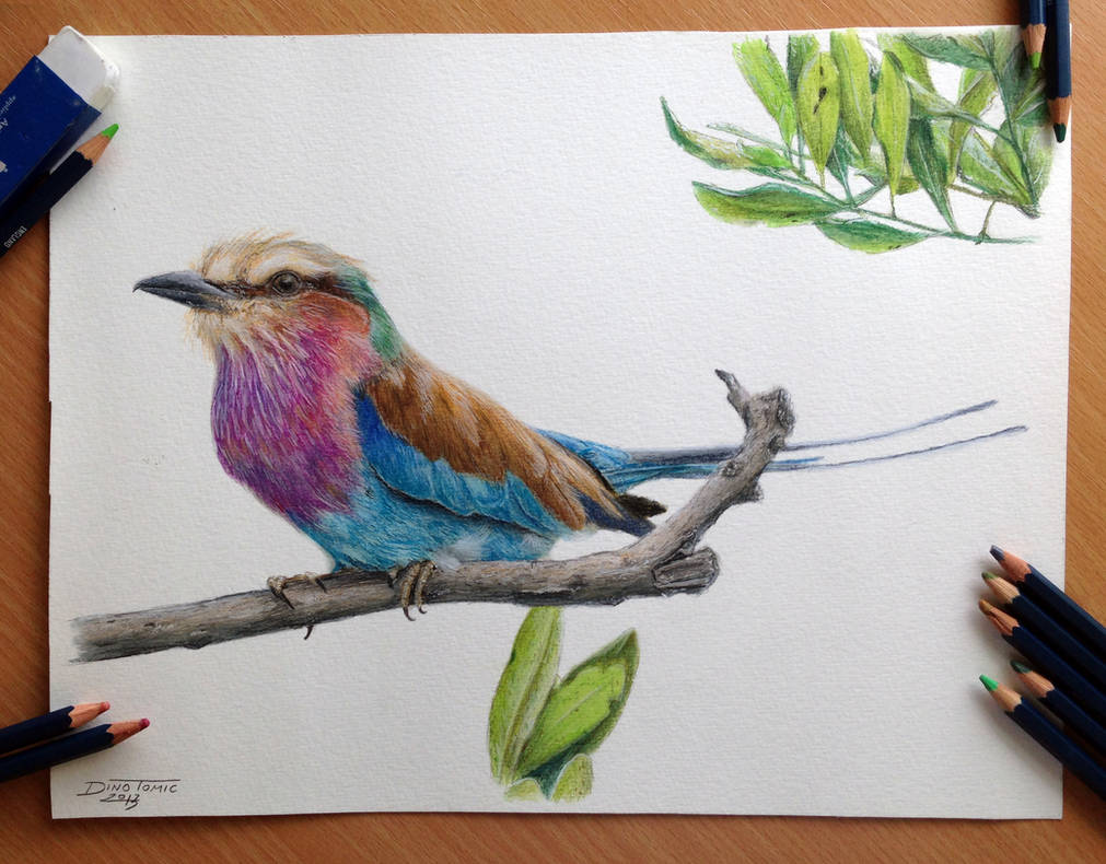 Bird color pencil drawing by atomiccircus on deviantart
