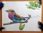 Bird color pencil drawing