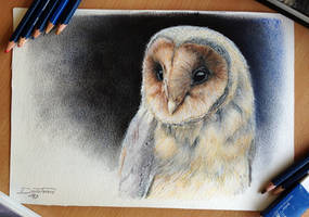 Owl Color Pencil Drawing by AtomiccircuS