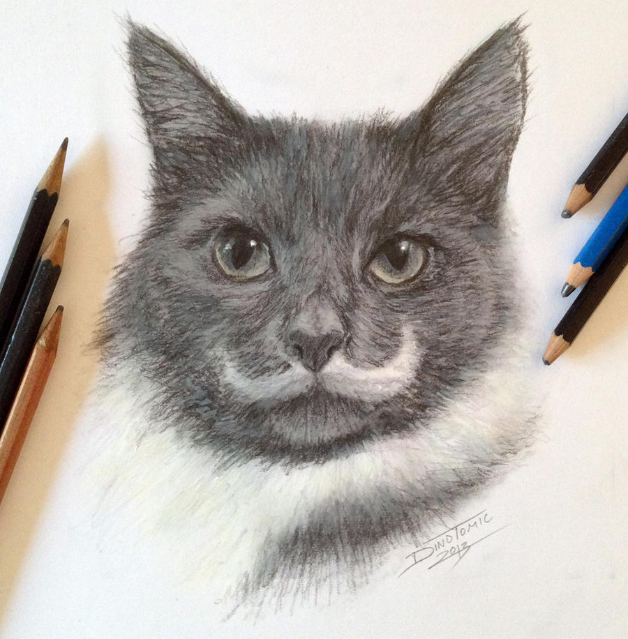 Pencil Cat fast Sketch