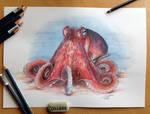Octopus Pencil Drawing