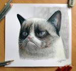 Pencil Drawing of the Grumpy Cat