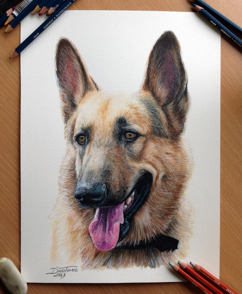 Pencil drawing of a schaefer by AtomiccircuS