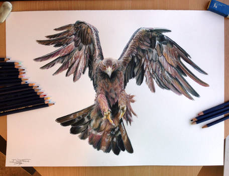 Golden eagle Color pencil drawing